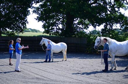 Horses4Change 041.JPG