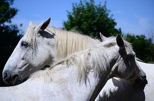 Horse Behaviour Horses4Change.JPG