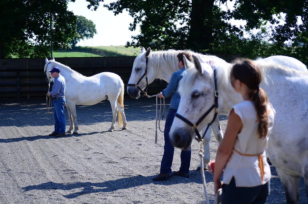 Horses4Change