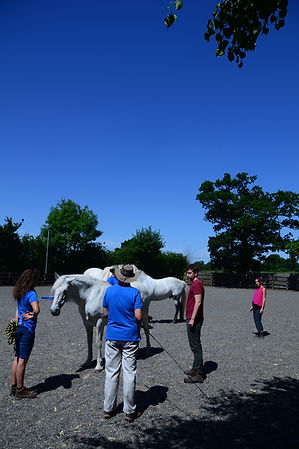 Horses4Change 149.JPG