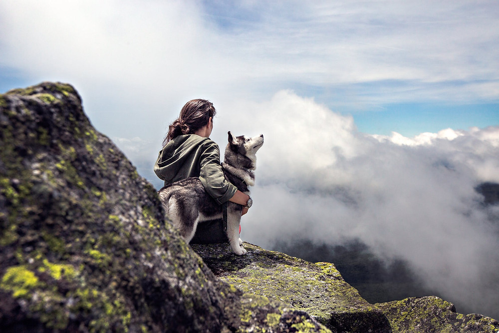 Dogs help anxiety