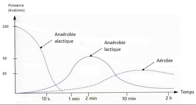Le système Anaérobie