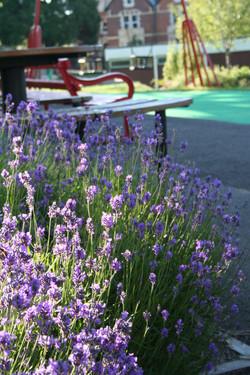 Belle Vue Park June 2011 038