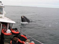 balenas