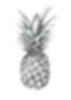IMGBIN_pineapple-drawing-art-printmaking