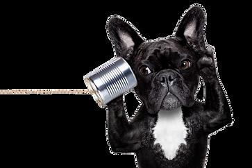 IMGBIN_french-bulldog-chihuahua-tapmedic