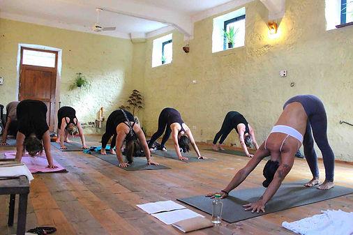 Downward dog yoga studio.jpg