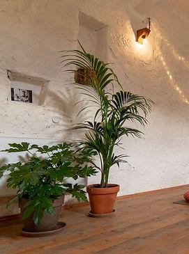 yoga shala with plants and mats left.jpg