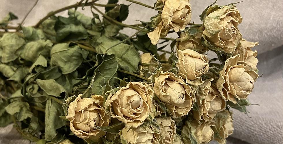 Bouquet de roses séchées crème