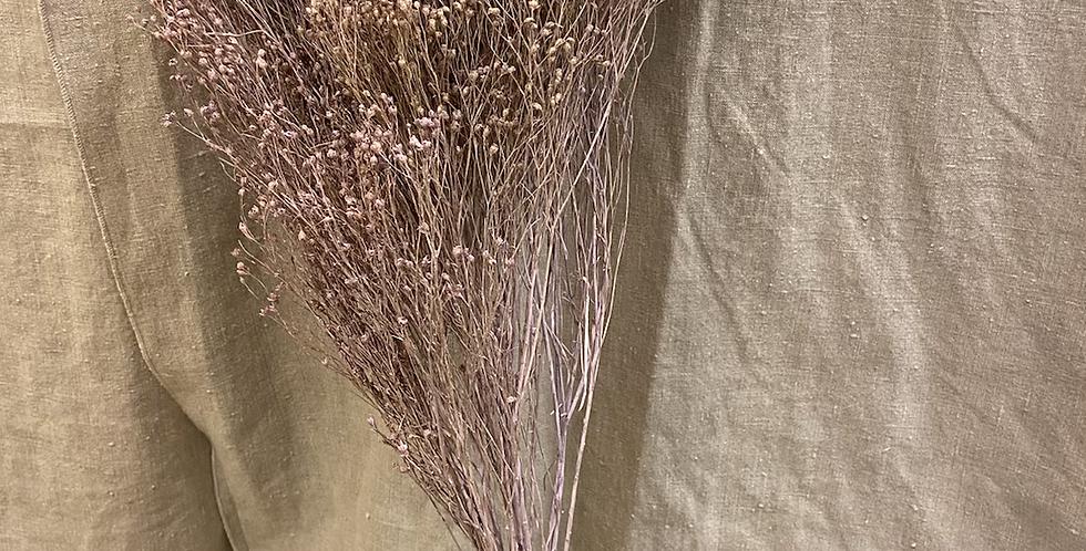 Broom Bloom Parme