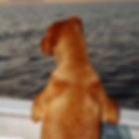Rory-sunset-e.jpg