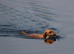 Glory in water with duck (Custom).jpg