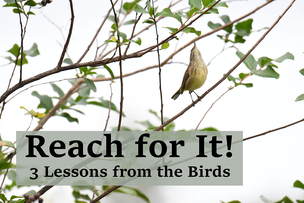 Reach for it! 3 Lessons from the birds
