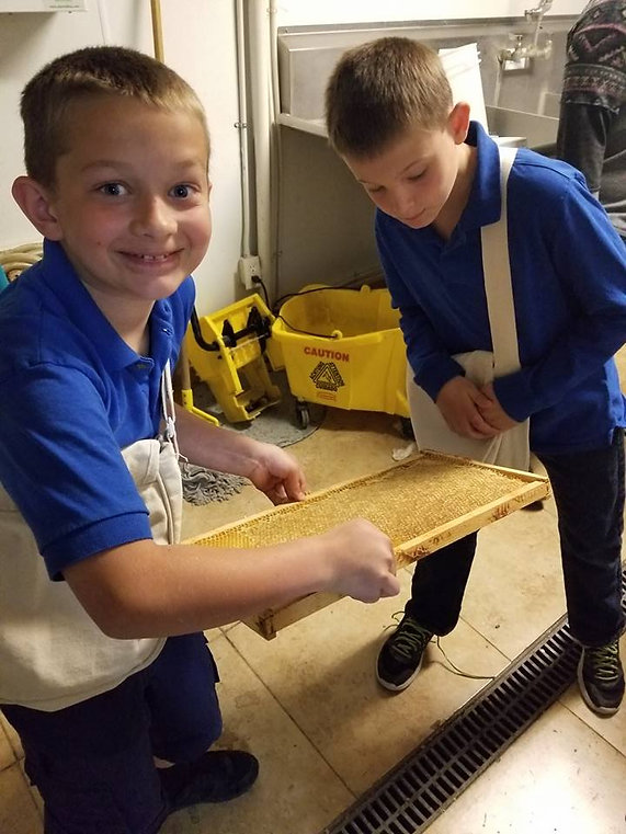 students inspect a honeycomb tray