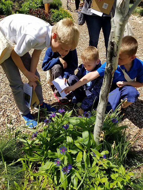 students study plants in a botanical garden