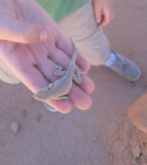 student holding a desert lizard
