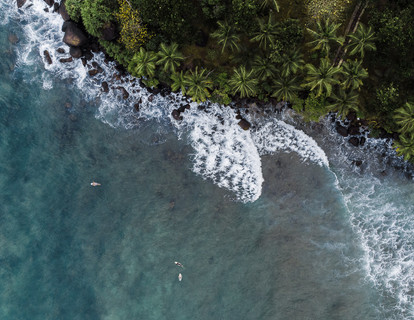 palm tree drone-2.jpg