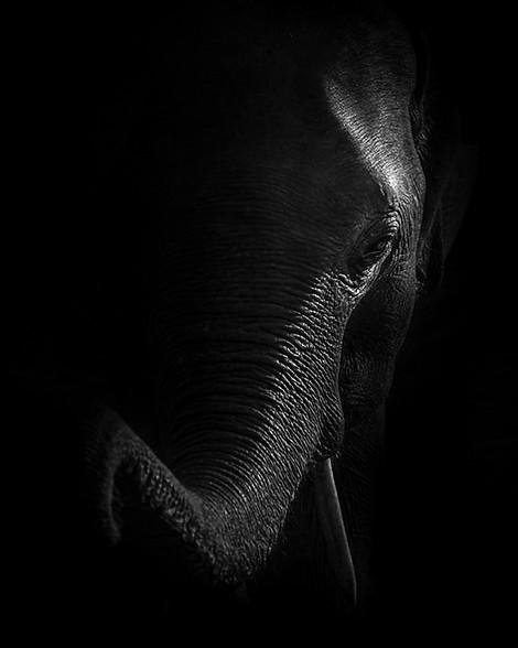 Sri Lanka - Elephant.jpg