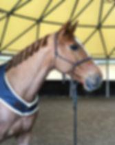 Ethologie - Comprendre son cheval