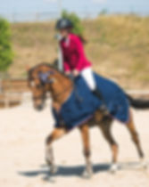 Compétition - Performances du cheval