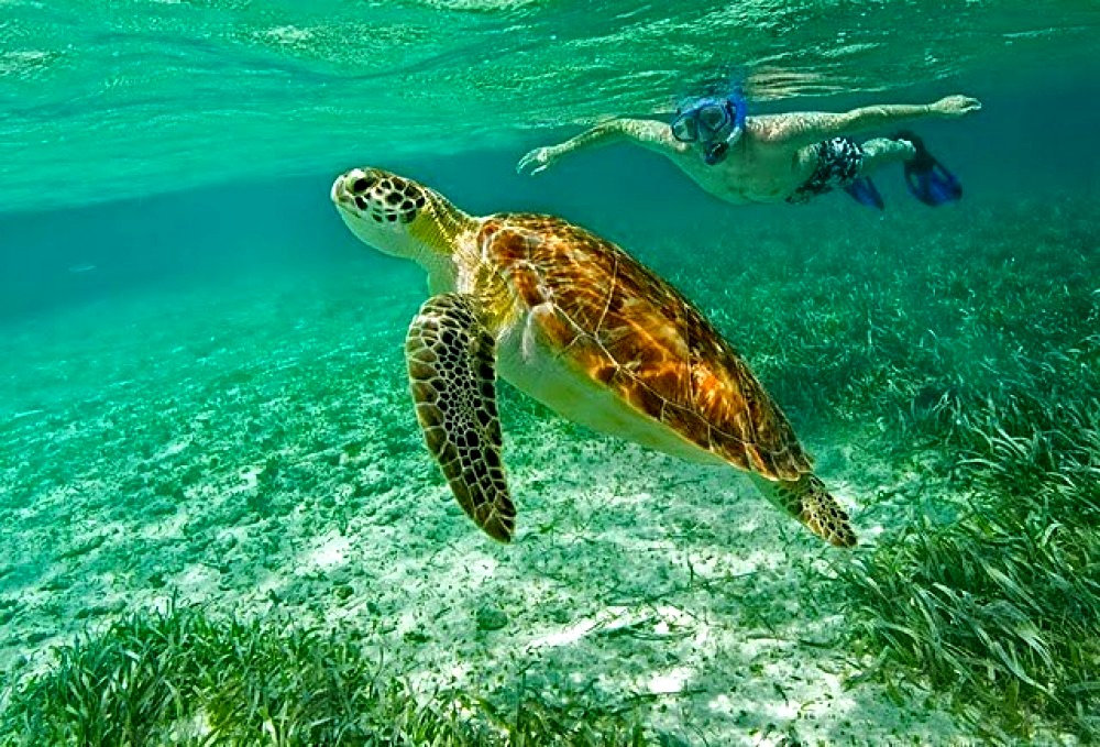 Belize Barrier Reef Snorkeling Adventure