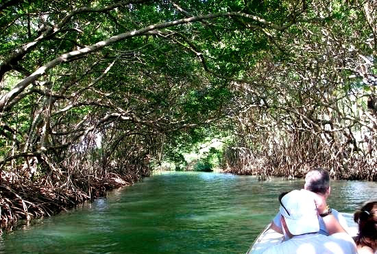 Lamanai Jungle River Tour
