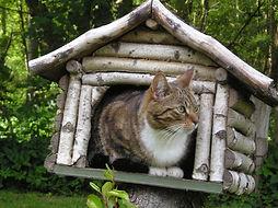houten-vogelhuisje-met-kat.jpg
