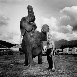 Elefant og mann