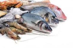 fishes.jpeg
