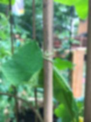 cucumber swirl.jpg
