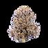 fruity-pebbles-cbd-hemp-flower_720x_edited.png