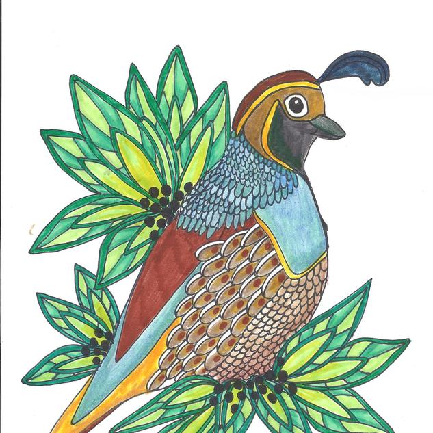 quail1.png