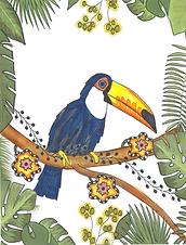 toucan1.png