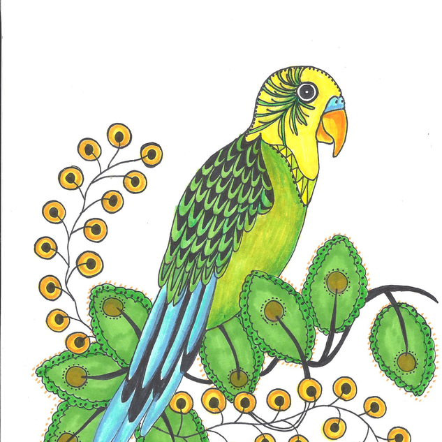 parakeet1.png