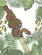 anaconda1.png