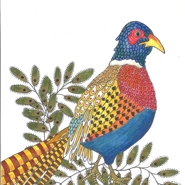 pheasant2.png