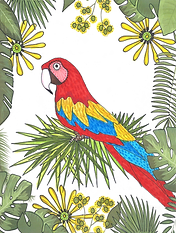macaw2.png