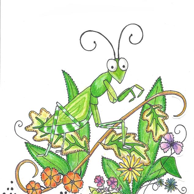 praying mantis1.png
