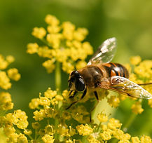 bee-spring_VSWJOBUY1B.jpg