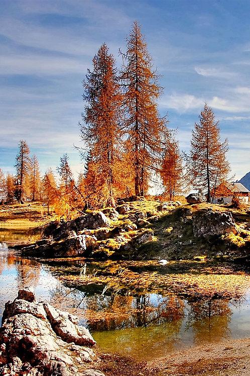 Sfondo pini