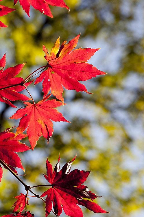 Sfondo foglie
