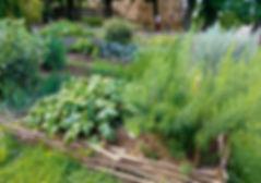 Dārzs.jpg