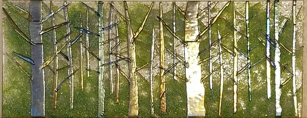 Douglas Fir Forest