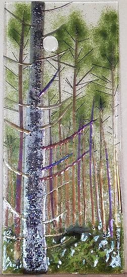 Evergreen Full Moon Forest