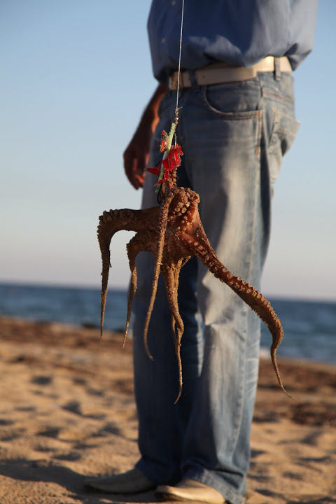 Catching Octopus in Greece