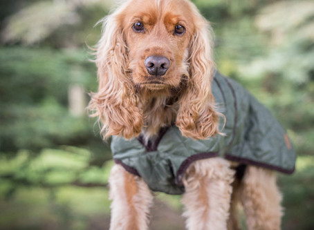 Keeping Your Dog Warm In Winter