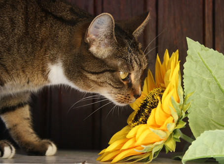 10 Common House Plants That Are Toxic to Pets