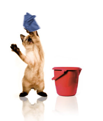 home cat.jpg