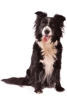 kurs na zamówienie dla opiekunów psów i treserów