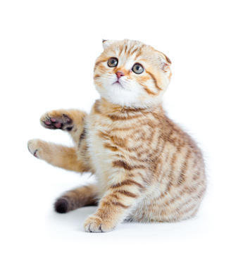 Webinar Pierwsze miesiące życia kotów z imiennym certyfikatem